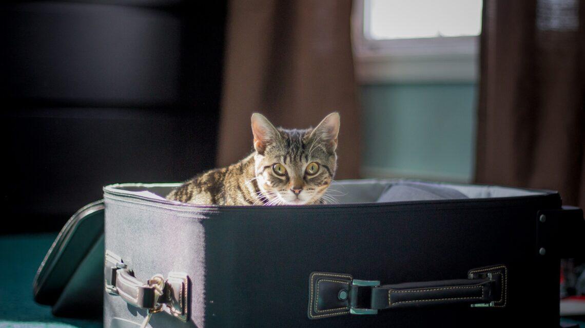 Senior Katzen mit in den Urlaub nehmen